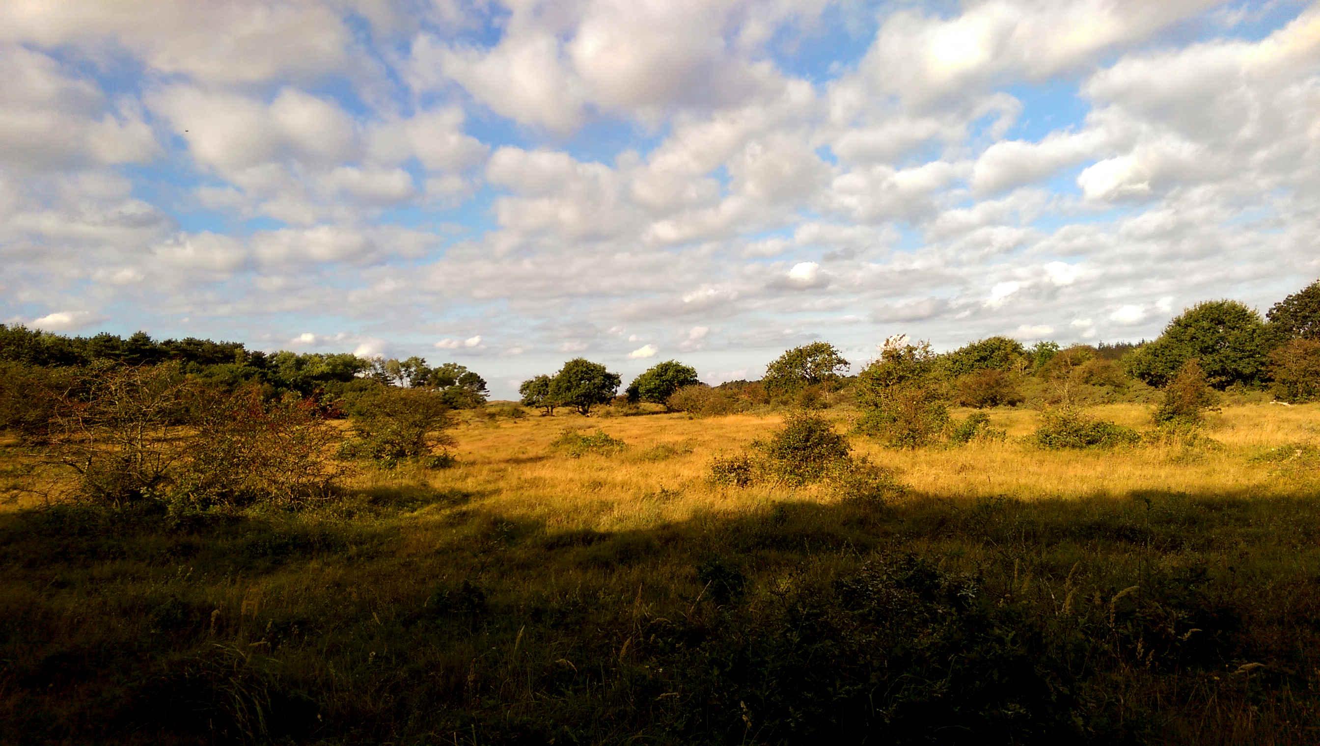 Heide bij Castricum